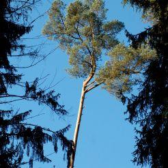Eiswoog Pfälzerwald-6