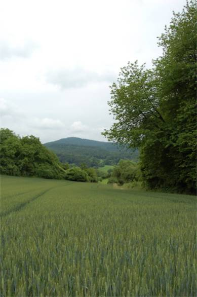 Gerstenfeld