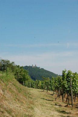 Blick auf das Auerbacher Schloss