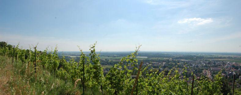 Zwingenberg_Panorama4