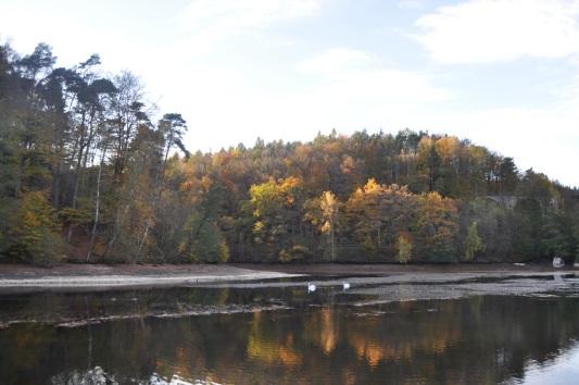 Eiswoog - Pfälzerwald